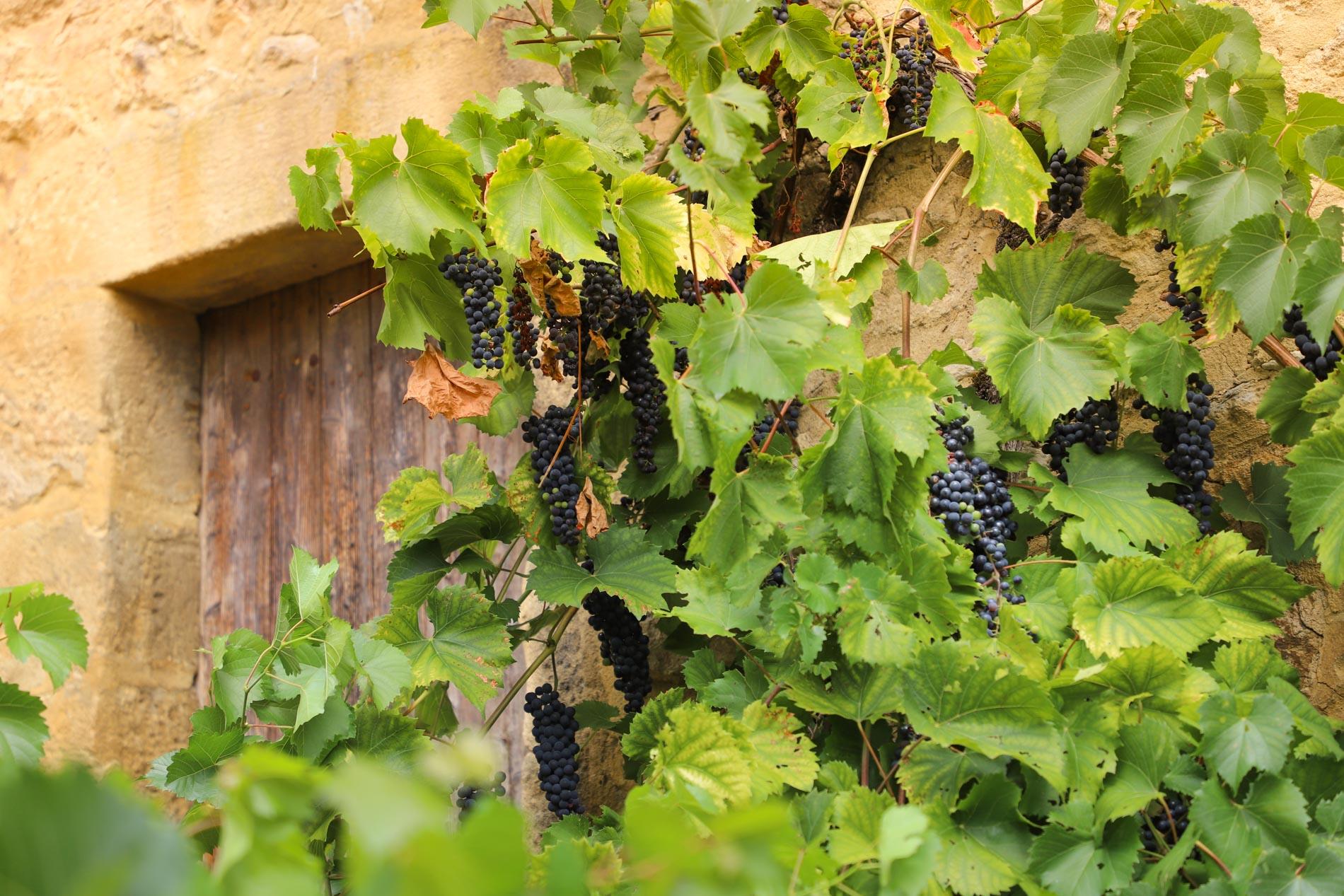 Raisin village de Dordogne