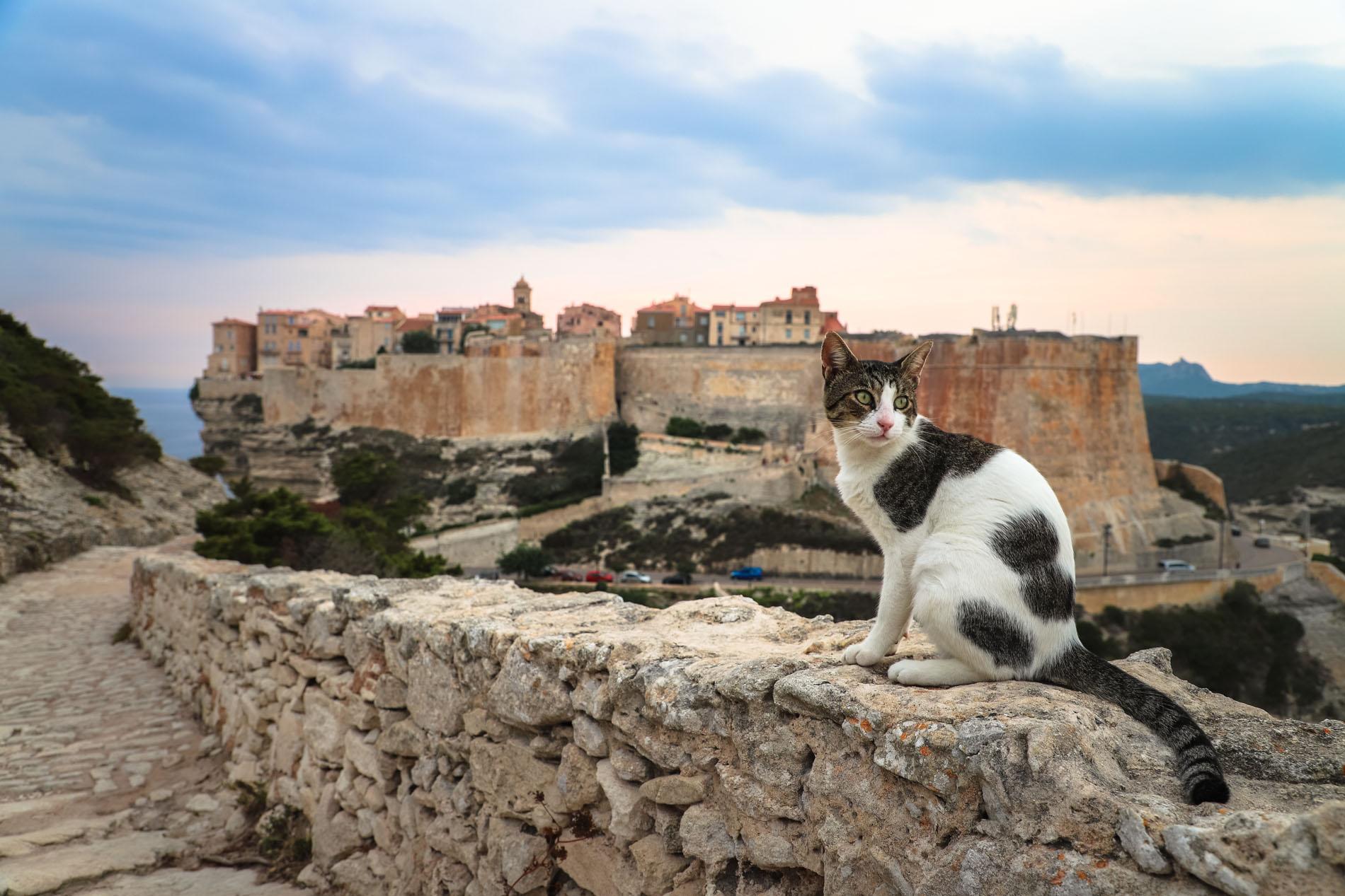 Bonifacio-Citadelle