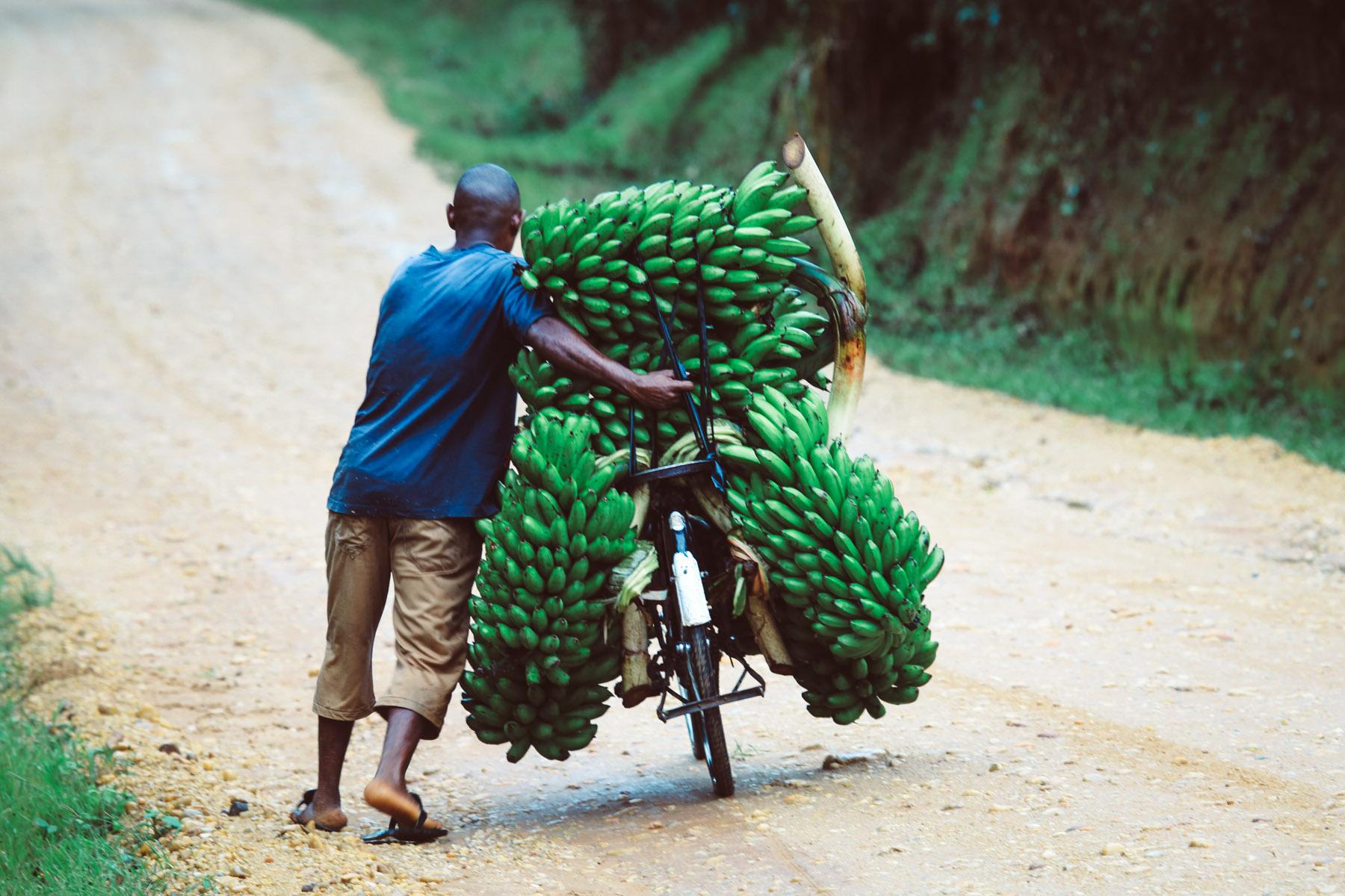 bananes-ouganda