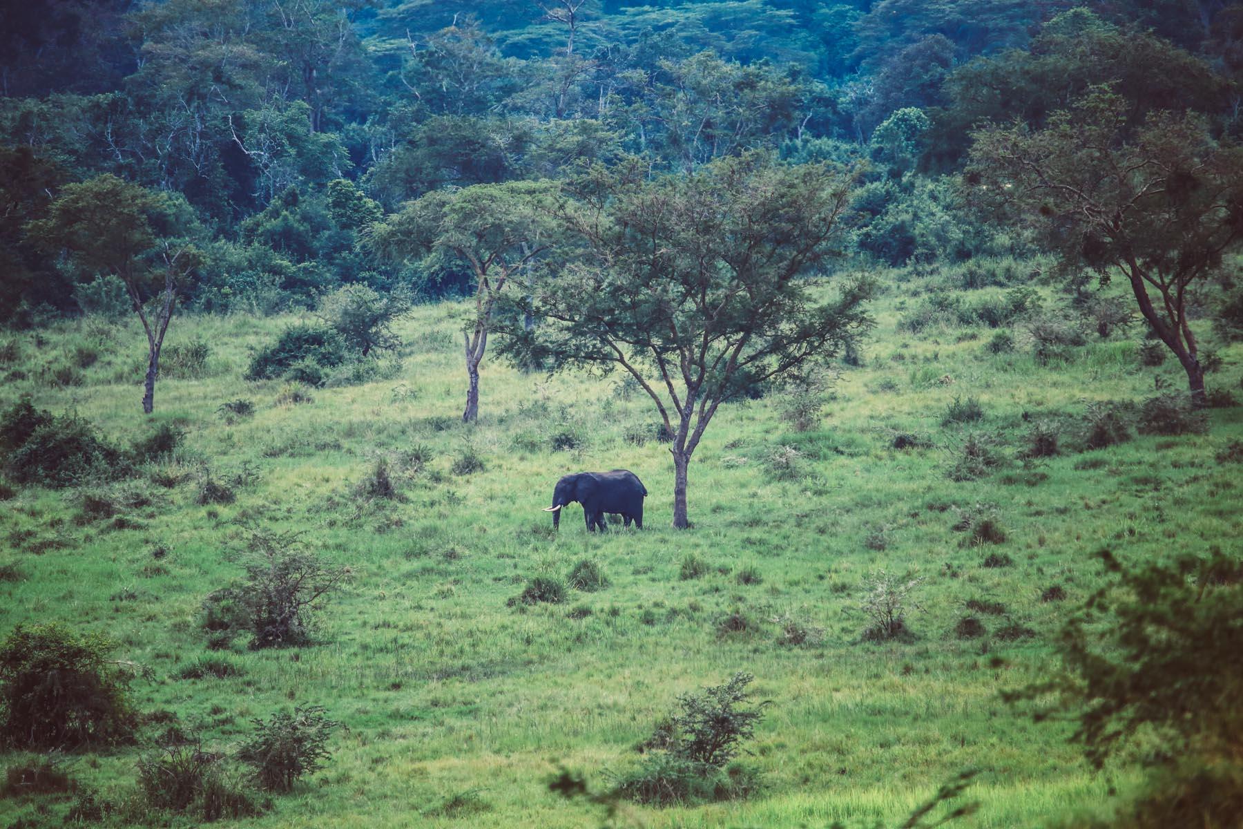 parc-queen-elisabeth-ouganda