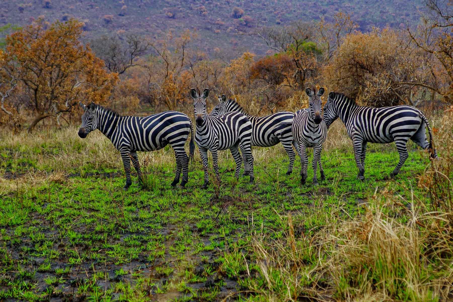 Akagera-National-Park-Kayonza-Rwanda