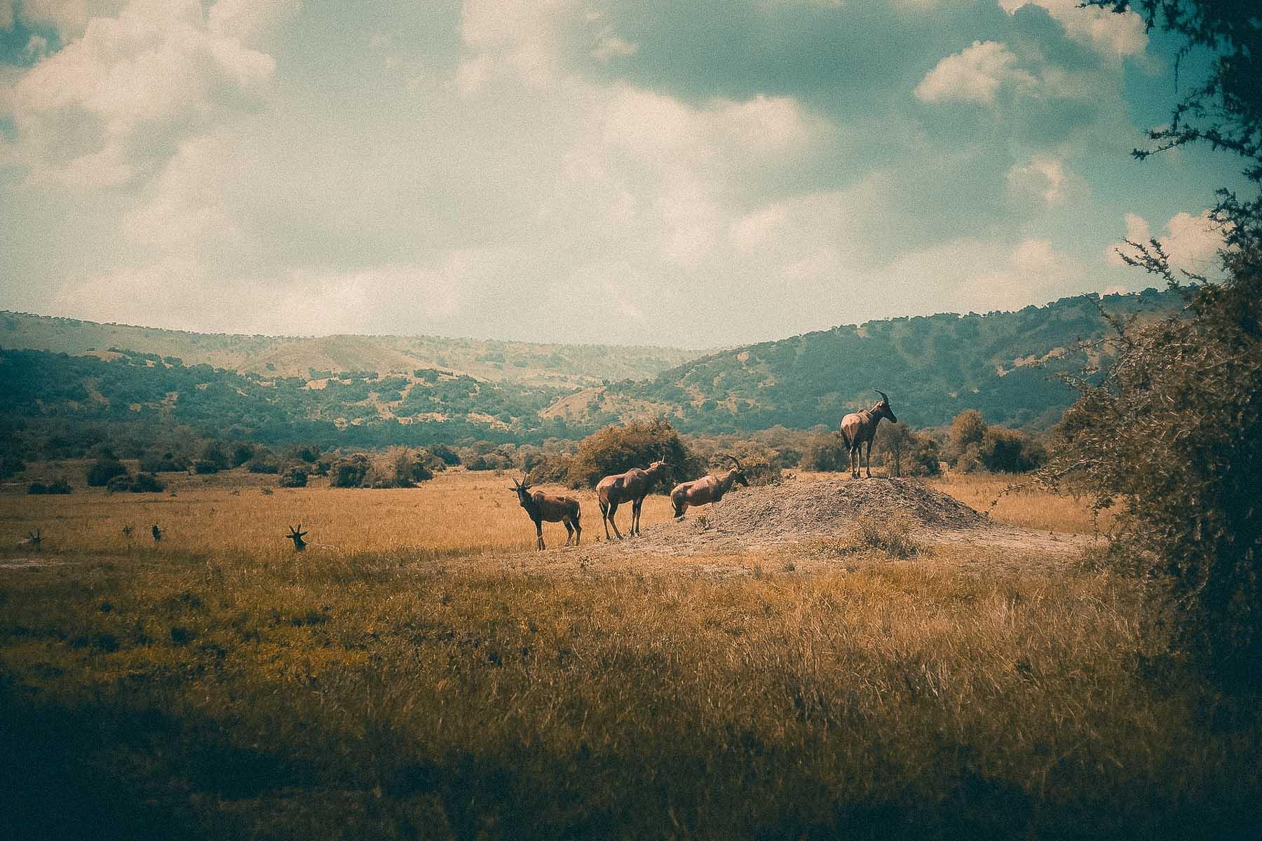 Akagera-Park-Afrique