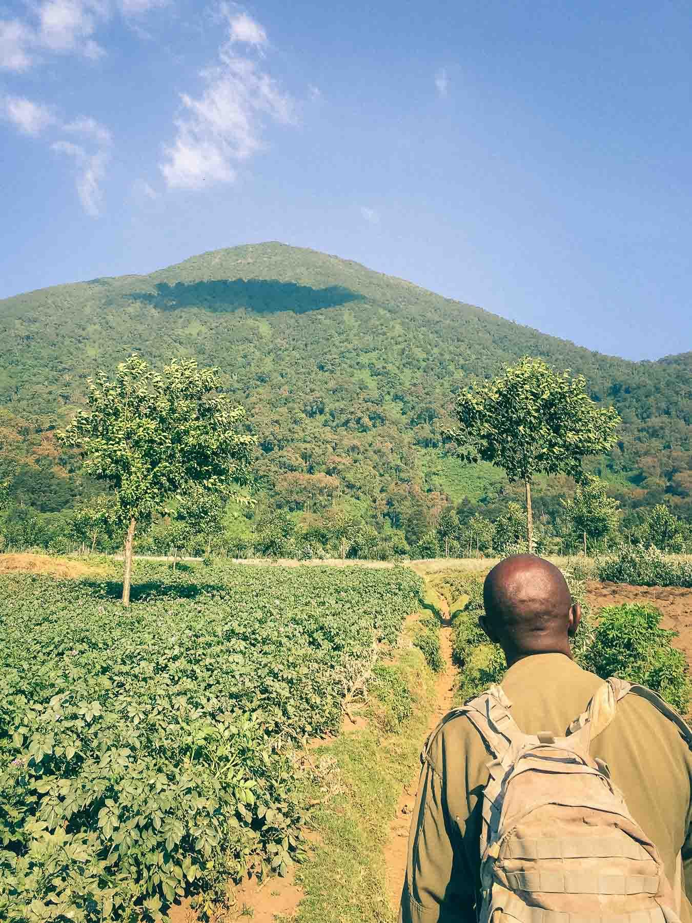 voir-les-gorilles-des-montagnes-au-Rwanda