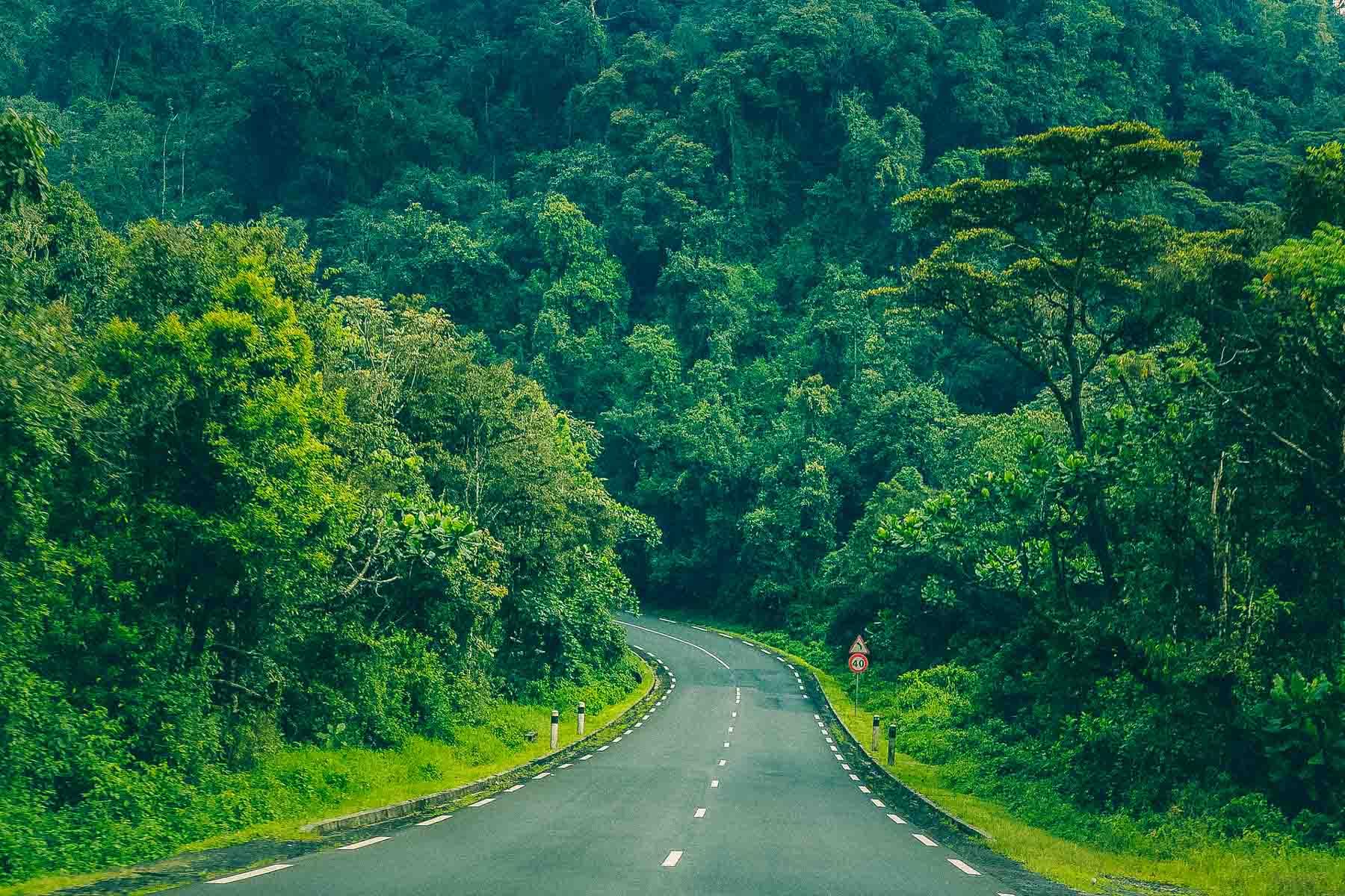 Visiter-Nyungwe-Park-Rwanda