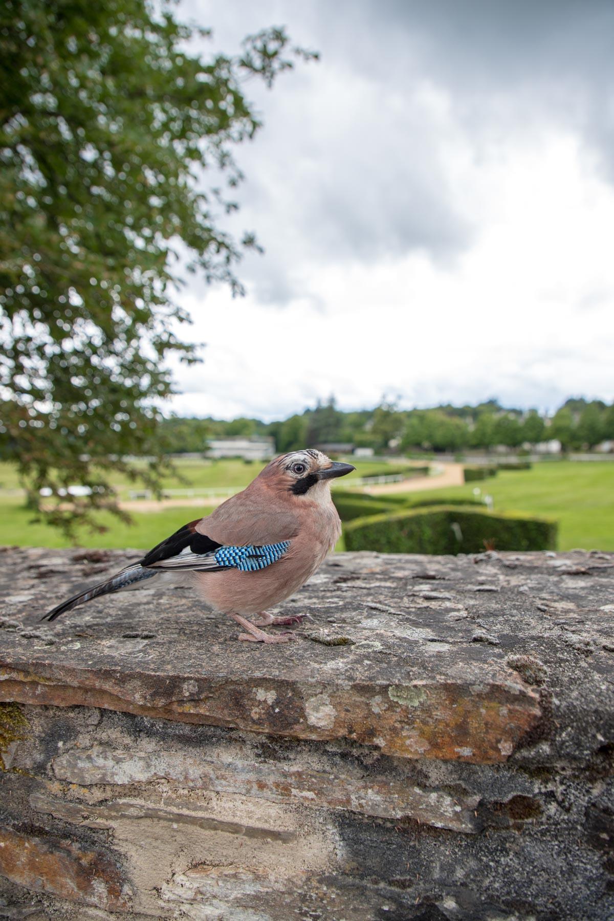 oiseau-correze