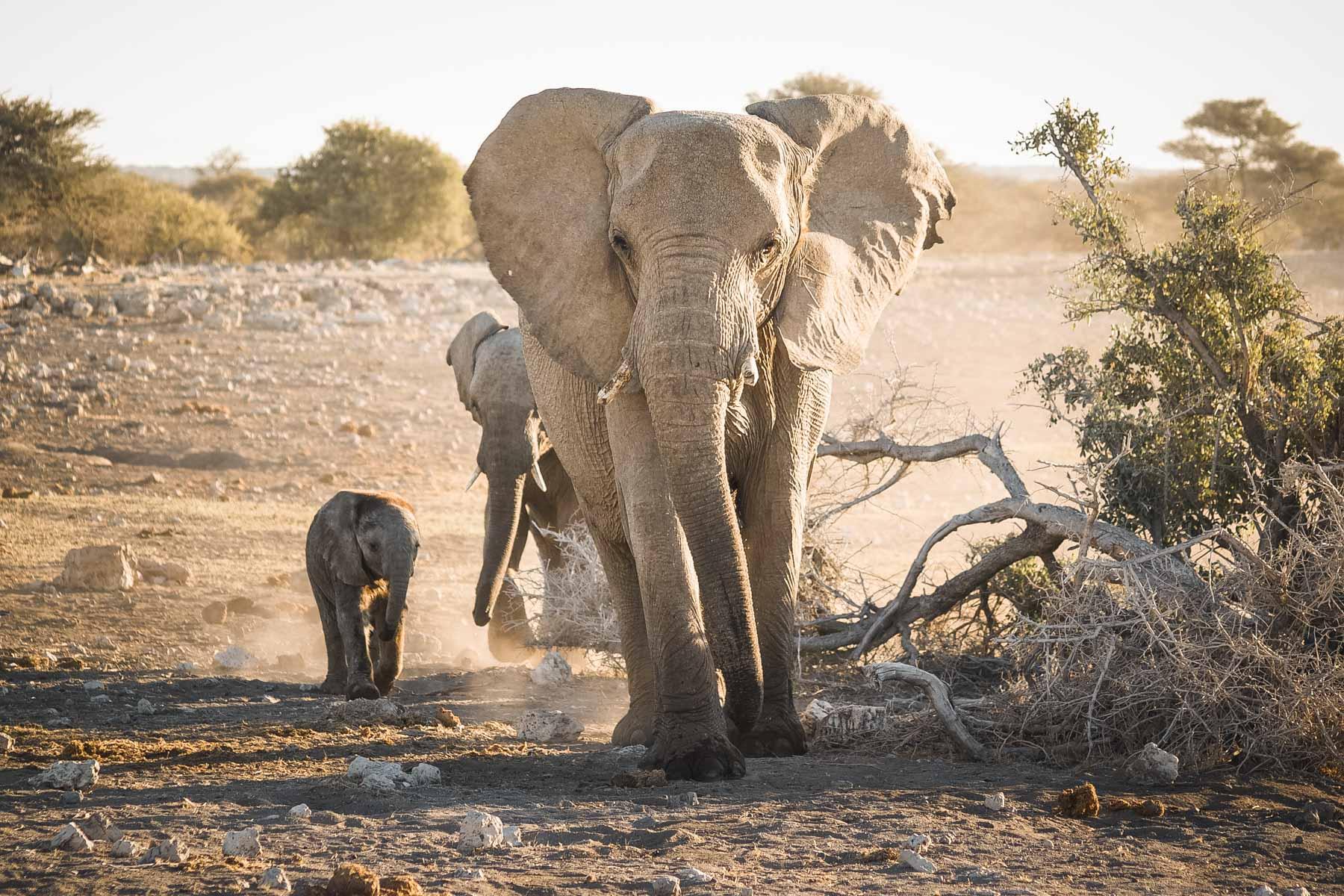 voyage-en-namibie