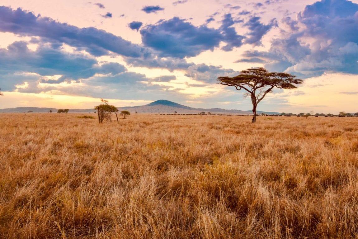 Voyager-en-Tanzanie-pour-faire-du-volontariat-Serengeti
