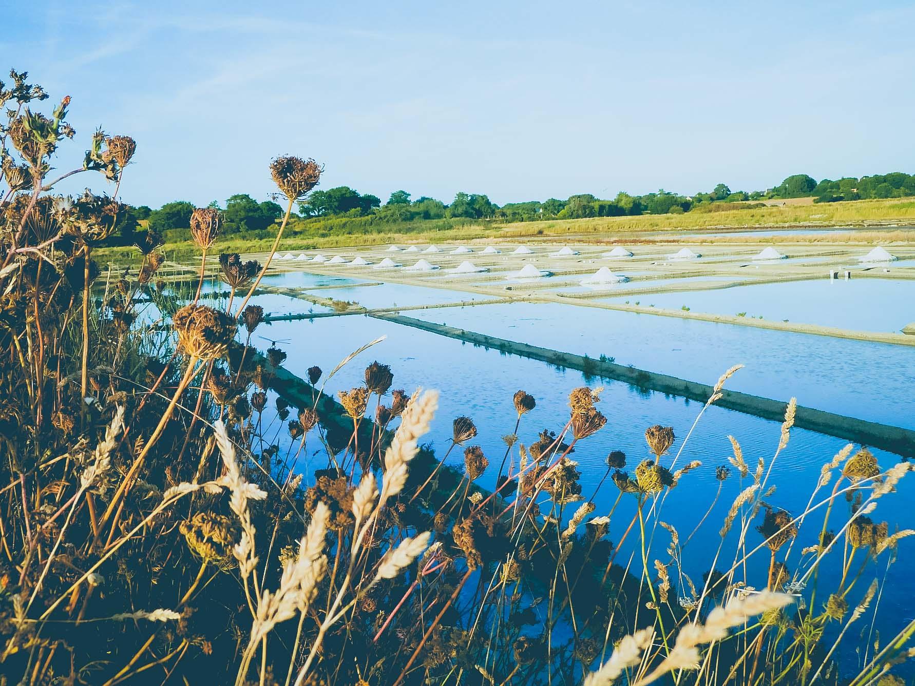 visiter-les-marais-salants-avec-un-paludier