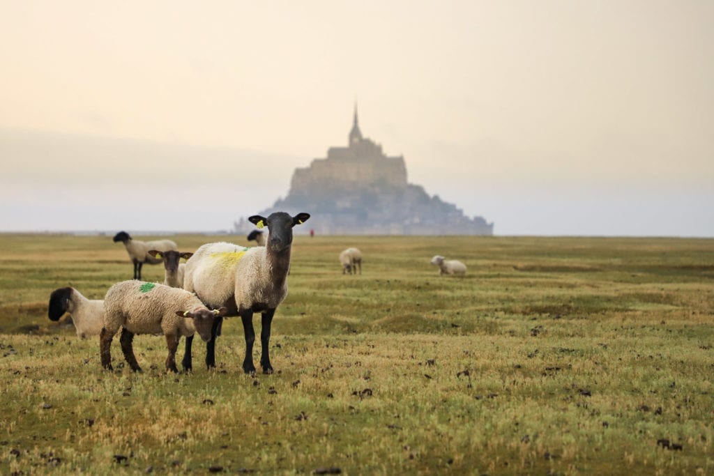 pres-sales-mont-saint-michel
